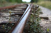 Nature on track